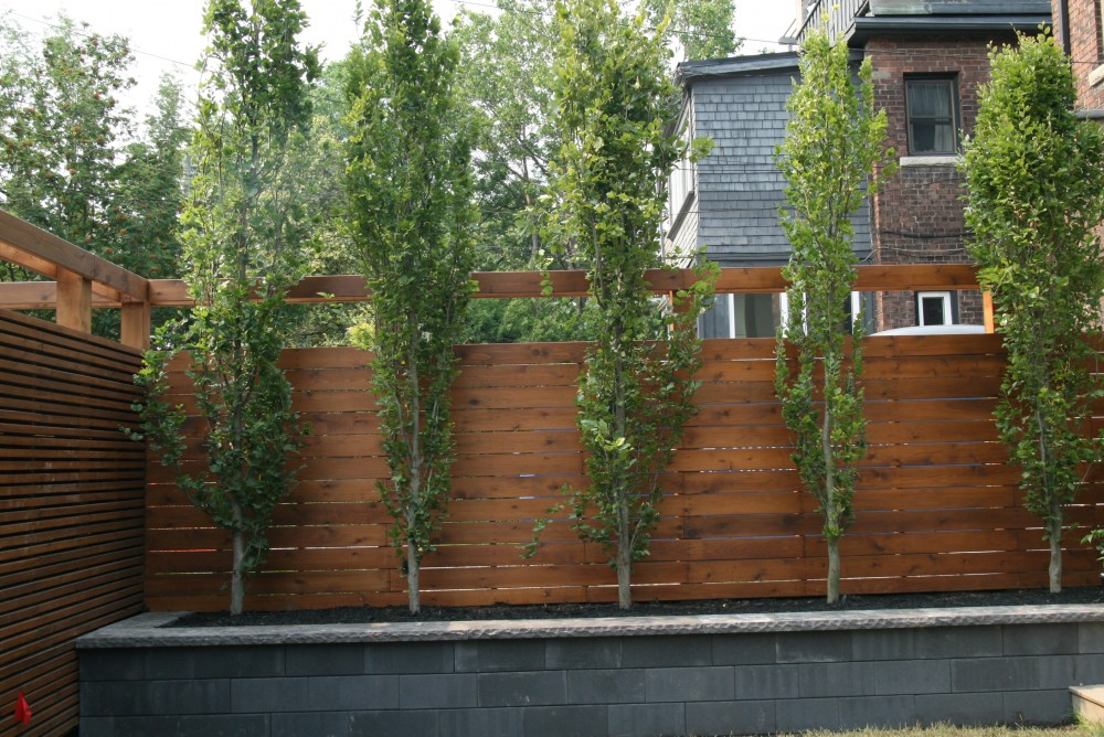 retaining walls, contemporary, black contemporary wall, columnar beeches, privacy trees